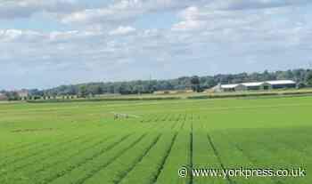 Light aircraft crash lands near York   York Press - York Press