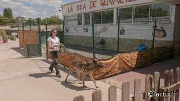 A Gennevilliers, le plus grand refuge SPA de France se prépare avec la crainte d'abandons en masse - actu.fr