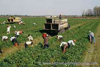 Health unit amends order to protect migrant farm workers - St. Thomas Times-Journal