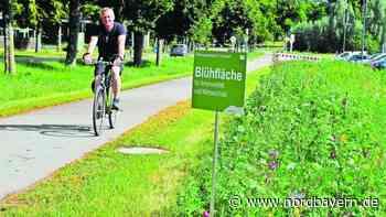 Mehr Blühflächen entlang von Radwegen - Nordbayern.de