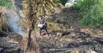 (Video) Arde pastizal en la colonia Miguel Hidalgo de Poza Rica - Vanguardia de Veracruz