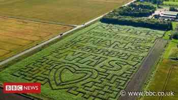 NHS maize maze tribute cut in March, Cambridgeshire