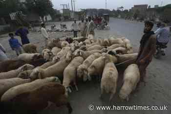 Pakistan bans open-air livestock markets in cities ahead of Eid - Harrow Times