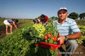 IFPA Paragominas abre chamada para aquisição de produtos da agricultura familiar - REDEPARÁ