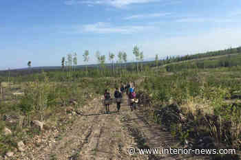 Tree planters get help with COVID-19 protective measures - Smithers Interior News