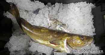 Conservation group criticizes northern cod quota as 'irresponsible'