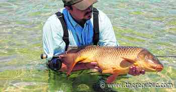Exciting opportunities fishing common carp - The Republic