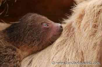 Biotropica, un parc zoologique exceptionnel à découvrir - Tendance Ouest
