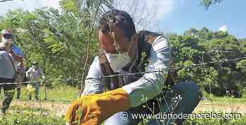 Arranca reforestación en 'La Tigra' Puente de Ixtla - Diario de Morelos