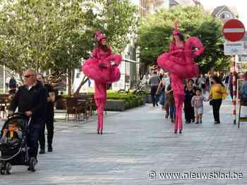 Flamingo's dollen in de straten