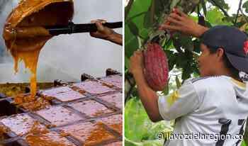 Impulsan proyectos productivos de cacao y caña panelera en Tesalia - Noticias