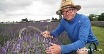 Lavendelfeld in Salzkotten: Den Duft von Urlaub in die Heimat geholt - Neue Westfälische