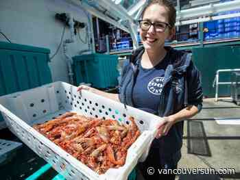 B.C. spot-prawn market 'in the toilet' as Asian glut slashes wholesale prices