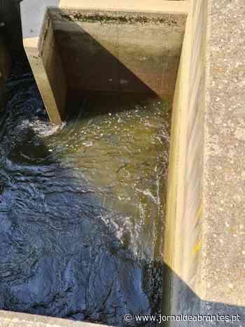 Abrantes: Escada passa-peixe do açude já funciona e peixe já está a subir (C/ÁUDIO) - Jornal de Abrantes