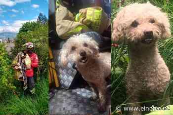 Bomberos rescataron un canino de una quebrada en La Campiña - Diario El Norte