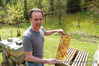Frühe Blüte ist ein Problem: Fürs Frühstück bleibt nur wenig Honig - Hilchenbach - Siegener Zeitung