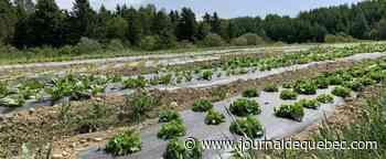 Sécheresse et canicules: deux fois plus de demandes d'indemnisation d'agriculteurs