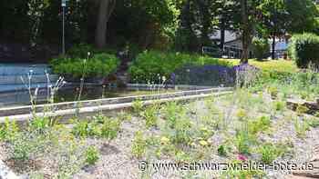 Niedereschach - Ortsbaumeister: Hochwertige Bepflanzung - Schwarzwälder Bote