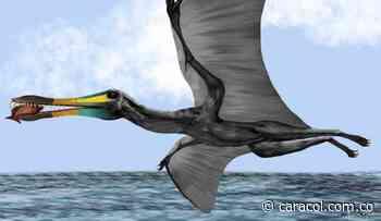 Hallan fósiles de reptil volador en Zapatoca, Santander - Caracol Radio