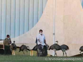 Bolsonaro é bicado por Ema no Palácio do Alvorada – Gazetaweb.com - Saúde Mental Descomplicada por Bruno Sampaio