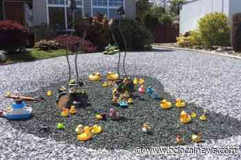 Quacker of a conundrum: Case of the missing rubber duckies in Parksville - BCLocalNews