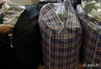 Senlis : 84 kg de cannabis saisis par la douane - actu.fr