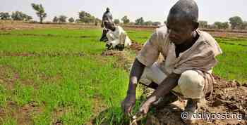 NITDA begins digitalization of Agric sector, adopts 130 farmers in Jigawa - Daily Post Nigeria