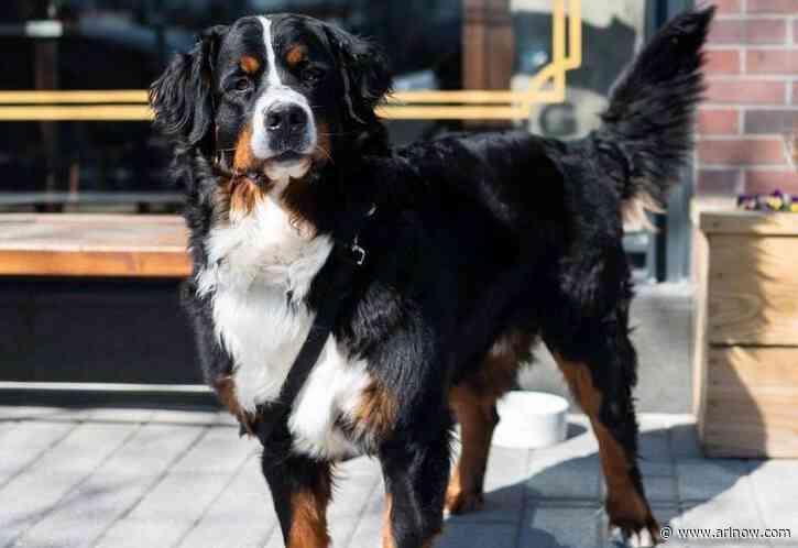 Arlington Pet of the Week: Walter