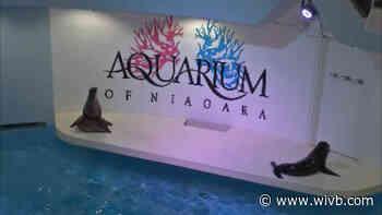 Aquarium of Niagara celebrating local girl who dedicated birthday to fundraising