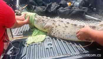 Reaparecen los caimanes aguja en Sardinata - La Opinión Cúcuta