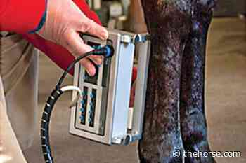 A Novel Tool for Equine Tendon Injury Rehab – The Horse - TheHorse.com