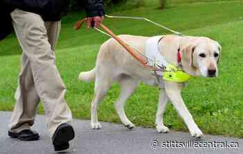 Guide dog training has had to adapt during pandemic - StittsvilleCentral.ca