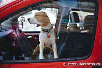 'Reckless behaviour' leaving pets in hot cars - StittsvilleCentral.ca