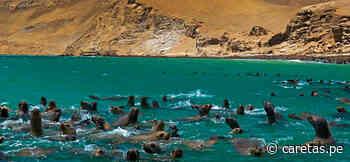 Revista internacional advierte que la Reserva Nacional de Paracas está en riesgo debido a la minería - Caretas
