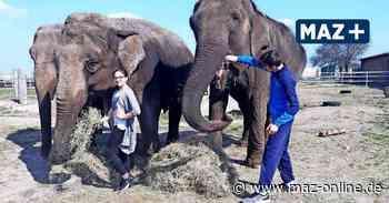 Corona: Zirkus Berolina aus Waltersdorf braucht Futterspenden für Tiere - Märkische Allgemeine Zeitung