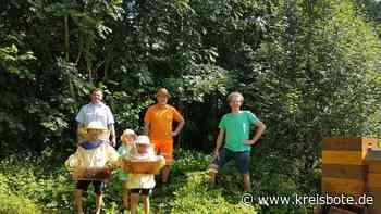 Peitinger Bienenzuchtverein bringt sich ein: Für ein wild-blühendes Peiting - Kreisbote
