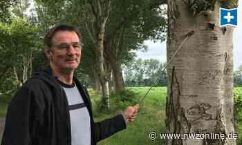 Baumkataster Für Edewecht: Schon 15.000 Bäume in Edewecht erfasst - Nordwest-Zeitung
