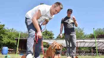 Obertshausen: Hundeschule - Spielerisch Gehorsam lernen - op-online.de