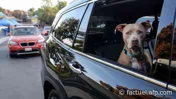 Briser la vitre d'une voiture pour sauver un animal en cas de fortes chaleurs ? Permis, sous conditions - AFP Factuel