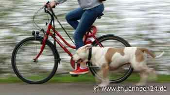 Hund: Mädchen fährt Fahrrad in Suhl und hat Tier an der Leine – die Tour endet im Krankenhaus - Thüringen24