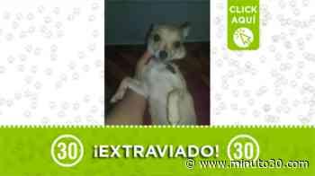Este perrito se extravió en el barrio San Gabriel - Minuto30.com