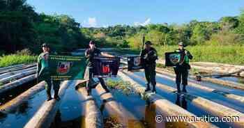 Polícia apreende 900 toras de madeira ilegal em rio de Manacapuru   Manaus Hoje - Jornal A Crítica