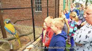 Trotz Corona: Rund 60 tolle Angebote für Kinder: Reichlich Ferienspaß in Drochtersen - Drochtersen - Kreiszeitung Wochenblatt