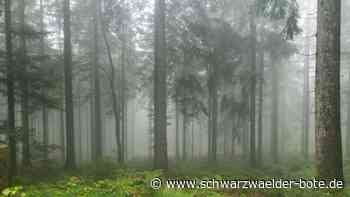 Oppenau/Ruhestein: Hält sich der Gesuchte im Nationalpark auf? - Schwarzwälder Bote