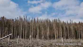 Waldbesitzer müssen befallene Stämme schnell aufarbeiten - Kreisbote