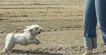 SETE - Une plage désormais destinée aux chiens sur le domaine de Vassal - Hérault-Tribune