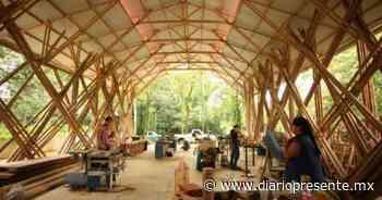 Tren Maya fortalecerá comercialización del bambú en Palenque - Diario Presente