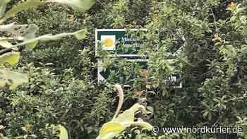 Bei Teterow breiten sich giftige Pflanzen aus - Nordkurier