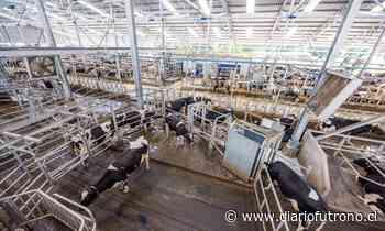 Diario Lechero muestra la lechería robotizada más grande del mundo - Diario Futrono