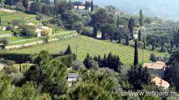 Œnotourisme : en Provence, dégustation vue mer dans les vignes de Bandol - Le Figaro